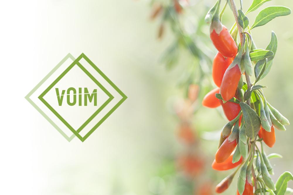 VOIM - Logo Design